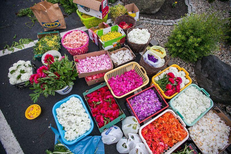 Kwiaty przygotowane do budowy kwietnych kobierców