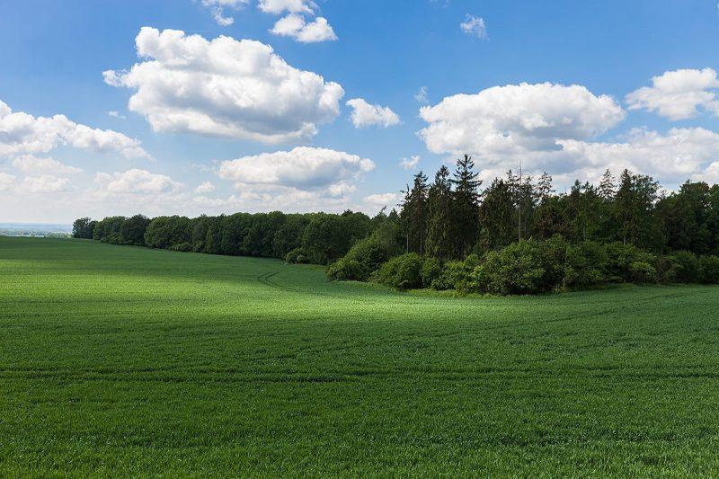 Śląska Toskania w Lichyni - Malownicze pola