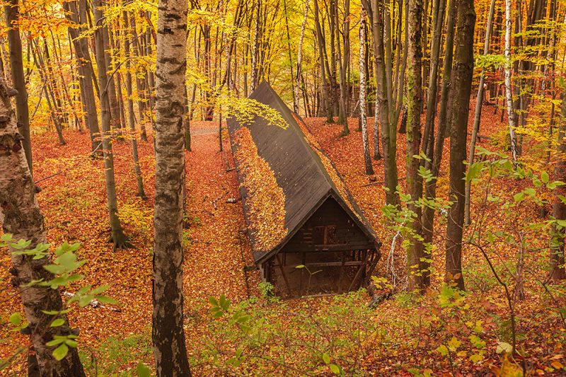 Pozostałości po drewnianych barakach